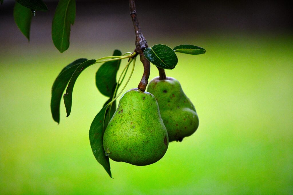 pear, fruit, green